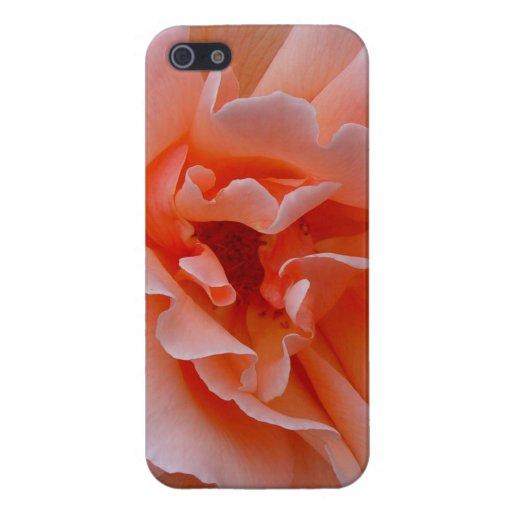 Just Joey Hybrid Tea Rose iPhone 5 Covers