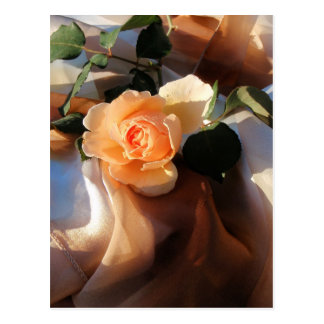 just joey orange rose post cards