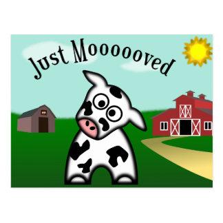 Just Moooved Postcard