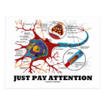 Just Pay Attention (Neuron / Synapse)