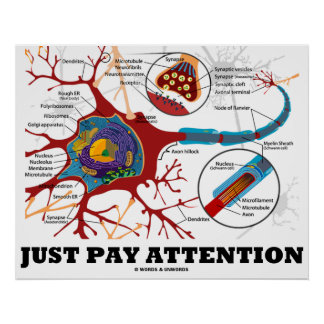 Just Pay Attention (Neuron / Synapse Anatomical) Poster