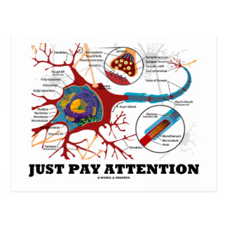 Just Pay Attention (Neuron / Synapse) Post Cards