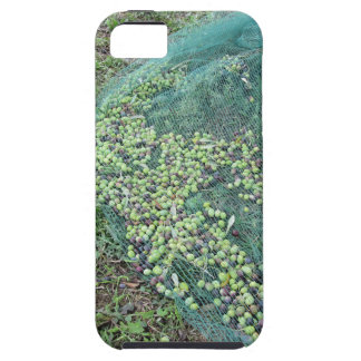 Just picked olives on the net during harvest time tough iPhone 5 case