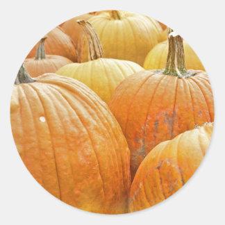 Just Pumpkins in the Patch Round Sticker