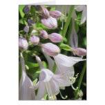 Justa Hosta customisable Notecard or Greeting Card