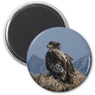Juvenile Bald Eagle by the Shore 6 Cm Round Magnet