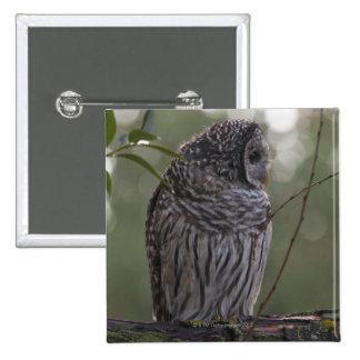 Juvenile Barred Owl (Strix varia) 2 15 Cm Square Badge