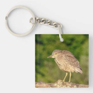 Juvenile Black Crowned Night Heron Double-Sided Square Acrylic Key Ring