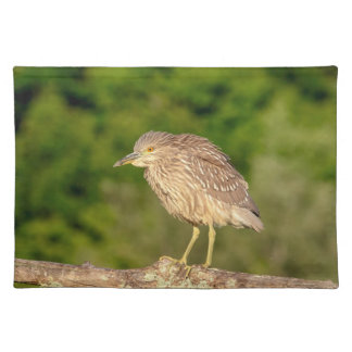 Juvenile Black Crowned Night Heron Place Mat