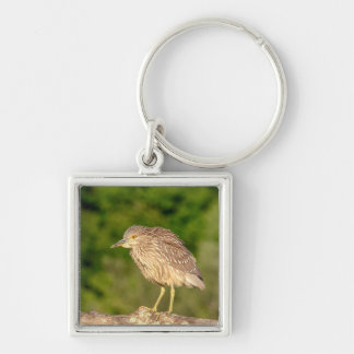 Juvenile Black Crowned Night Heron Silver-Colored Square Key Ring