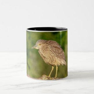 Juvenile Black Crowned Night Heron Two-Tone Coffee Mug