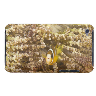 juvenile Clark's Anemonefish (Amphiprion) iPod Touch Covers