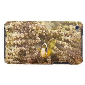 juvenile Clark's Anemonefish (Amphiprion) iPod Case-Mate Cases