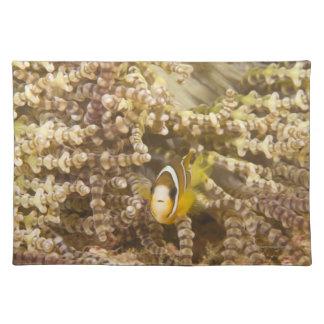 juvenile Clark's Anemonefish (Amphiprion) Placemat
