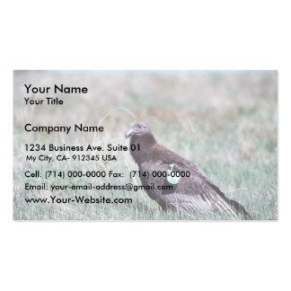Juvenile Condor Pack Of Standard Business Cards