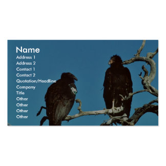 Juvenile Condors Pack Of Standard Business Cards