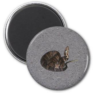 Juvenile Cottonmouth Snake 6 Cm Round Magnet