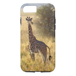 Juvenile Giraffe, Giraffa camelopardalis 2 iPhone 8/7 Case