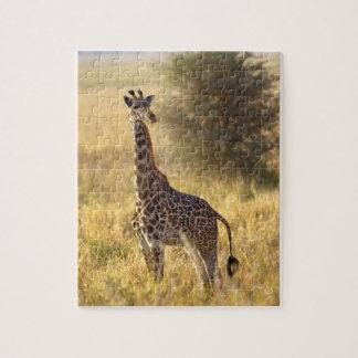Juvenile Giraffe, Giraffa camelopardalis 2 Jigsaw Puzzle