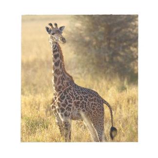 Juvenile Giraffe, Giraffa camelopardalis 2 Notepad