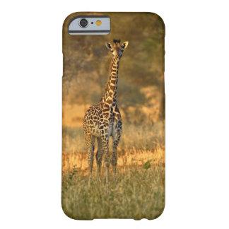 Juvenile Giraffe, Giraffa camelopardalis Barely There iPhone 6 Case