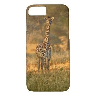 Juvenile Giraffe, Giraffa camelopardalis iPhone 8/7 Case