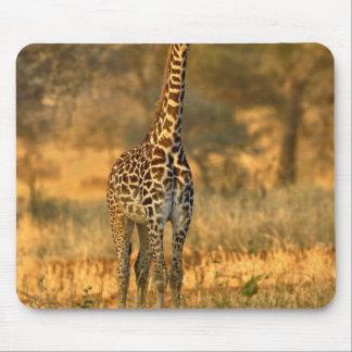 Juvenile Giraffe, Giraffa camelopardalis Mouse Mat