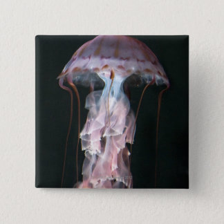 Juvenile jellyfish, Chrysaora (Pelagia) 15 Cm Square Badge