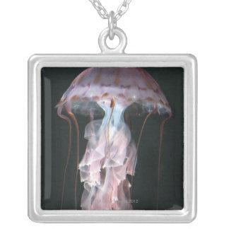 Juvenile jellyfish, Chrysaora (Pelagia) Silver Plated Necklace