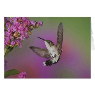 Juvenile male Ruby Throated Hummingbird in Card