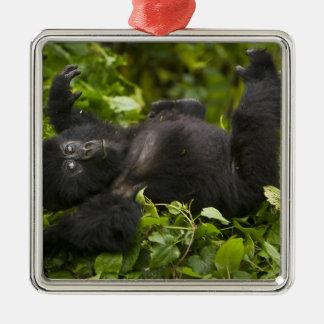 Juvenile Mountain Gorilla 2 Silver-Colored Square Decoration