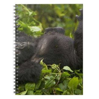 Juvenile Mountain Gorilla 2 Spiral Notebook