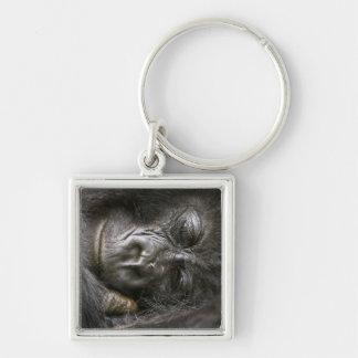 Juvenile Mountain Gorilla 4 Silver-Colored Square Key Ring