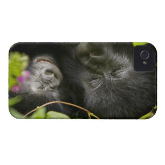 Juvenile Mountain Gorilla and his mother iPhone 4 Cases