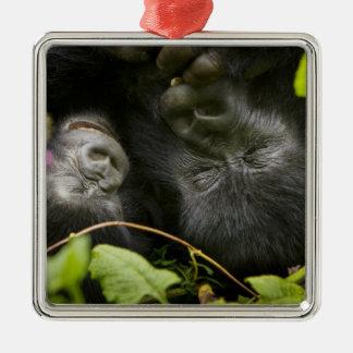 Juvenile Mountain Gorilla and his mother Silver-Colored Square Decoration
