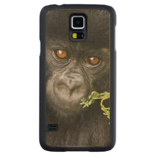 Juvenile Mountain Gorilla Carved Maple Galaxy S5 Case