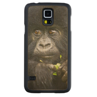 Juvenile Mountain Gorilla feeds on tender leaves 2 Carved Maple Galaxy S5 Case