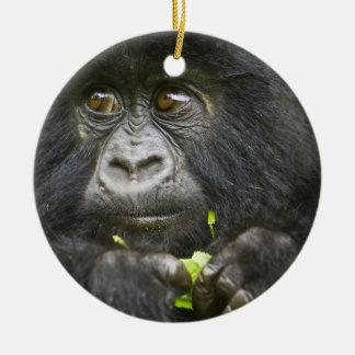 Juvenile Mountain Gorilla feeds on tender leaves 2 Round Ceramic Decoration