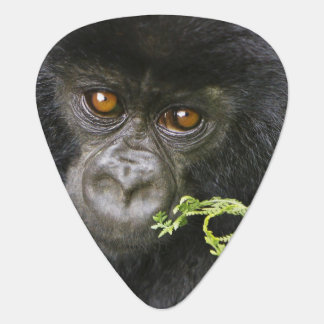 Juvenile Mountain Gorilla Plectrum