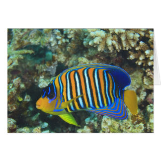 Juvenile Regal Angelfish Pygoplites Card