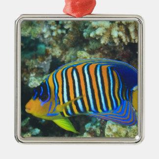 Juvenile Regal Angelfish Pygoplites Christmas Ornament
