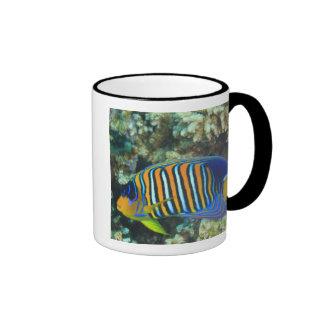 Juvenile Regal Angelfish Pygoplites Ringer Coffee Mug