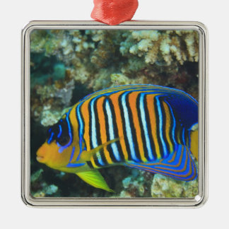 Juvenile Regal Angelfish Pygoplites Silver-Colored Square Decoration