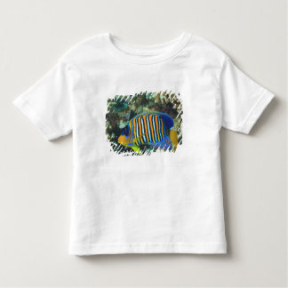 Juvenile Regal Angelfish Pygoplites Toddler T-Shirt