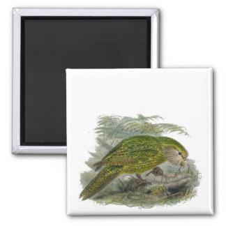 Kakapo Green Parrot Vintage Illustration Square Magnet