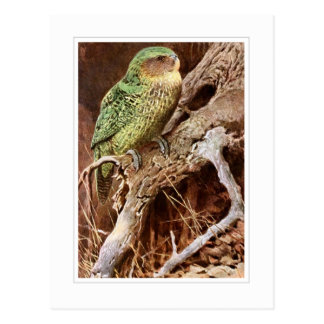 Kakapo Postcard