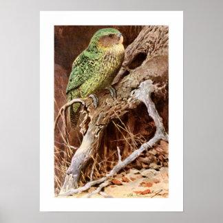 Kakapo Posters
