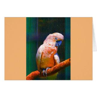 Kakatu digitally coloured changes, Nahaunahme, Greeting Card