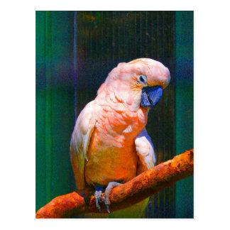 Kakatu digitally coloured changes, Nahaunahme, Postcard