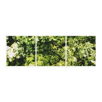 Kale 3 Panel Canvas Canvas Print